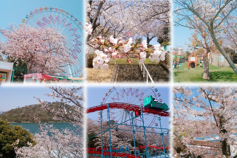 桜満開♪園内でお花見を楽しもう